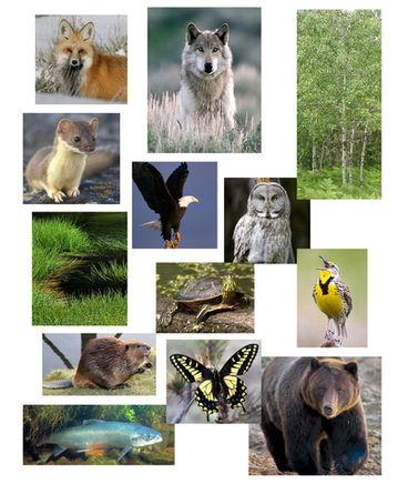 Trophic animals.jpg