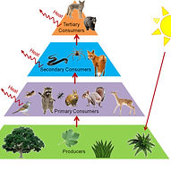 Energy pyramid.jpg