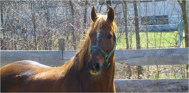 Sunrise Horse Farm