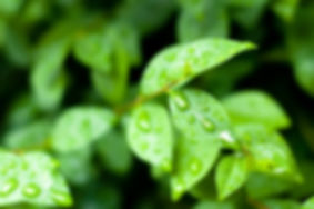 close up of water drops on fresh green l