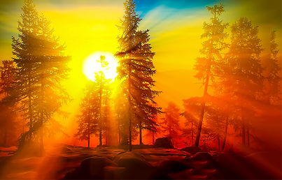 Sunrise in forest. Forest sunrise view.