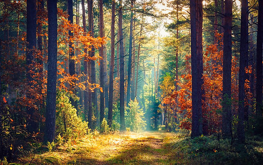 Autumn forest nature. Vivid morning in c