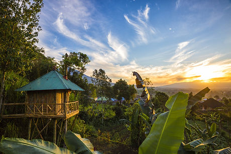 The sun rises over a jungle treehouse in
