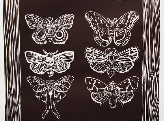 """Moth Studies"", 2014"