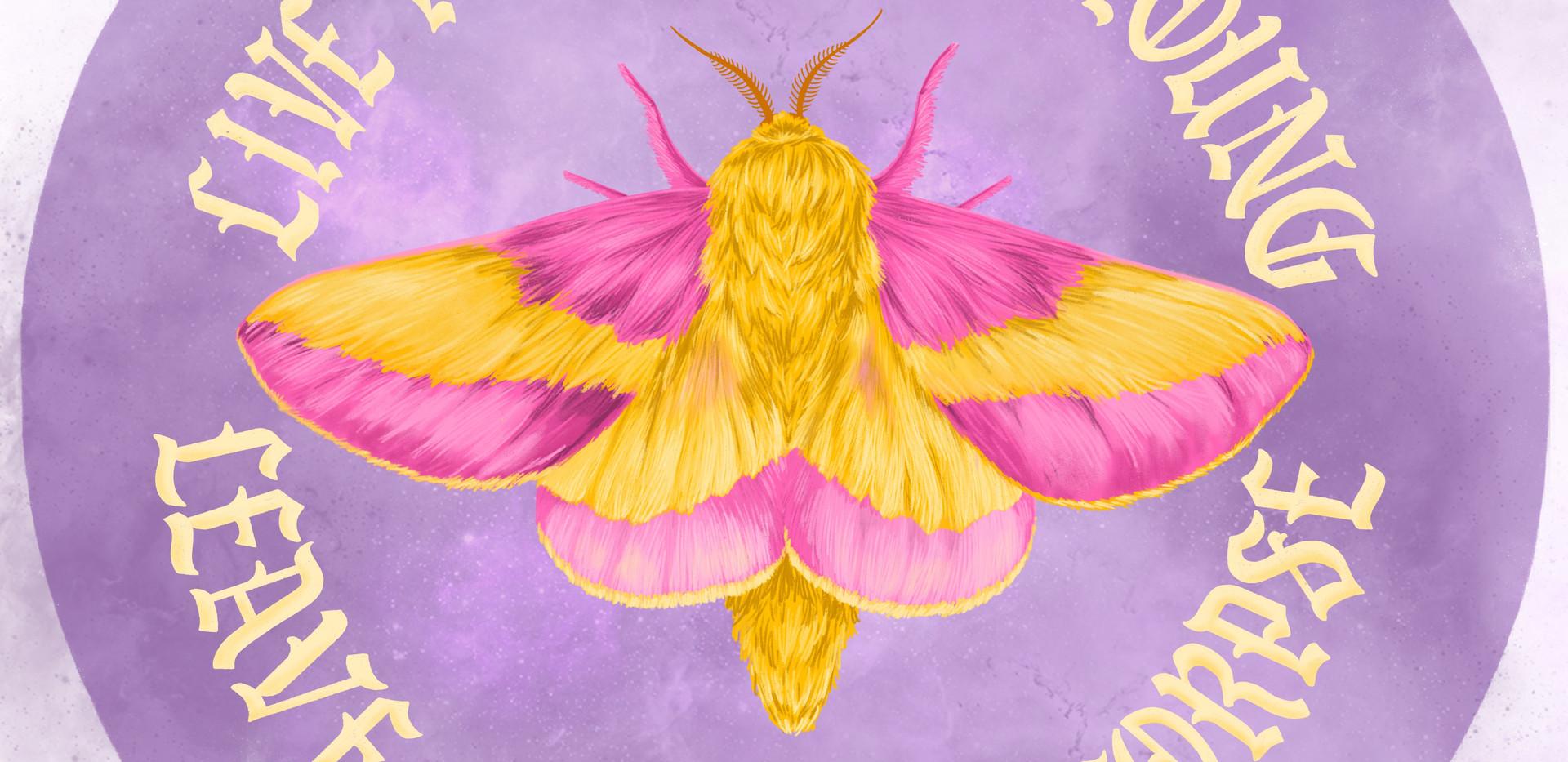 """""""Rosy Maple Moth"""", 2019"""