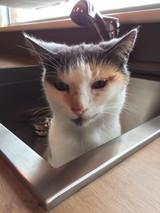 Kat die zichzelf wilt douchen ;)
