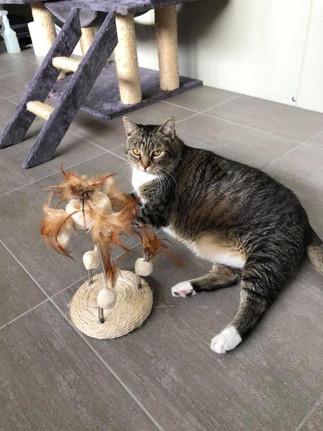 spelede kat