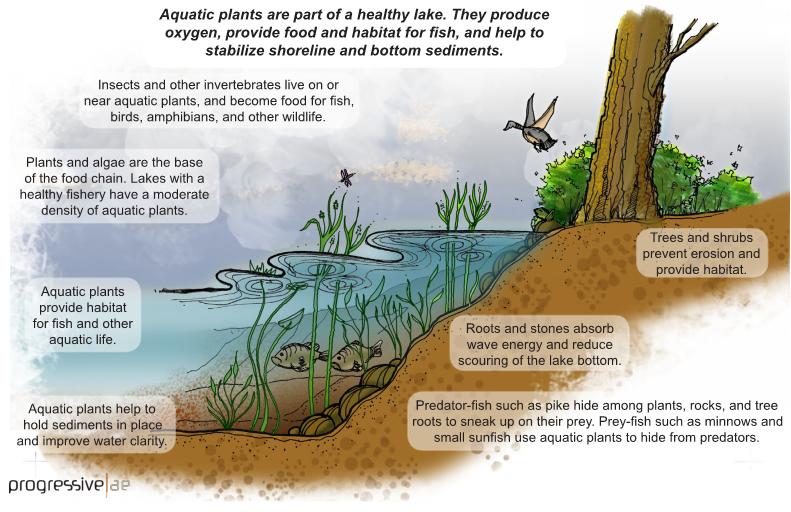 Aquatic Plants Are Part of a Healthy Lak