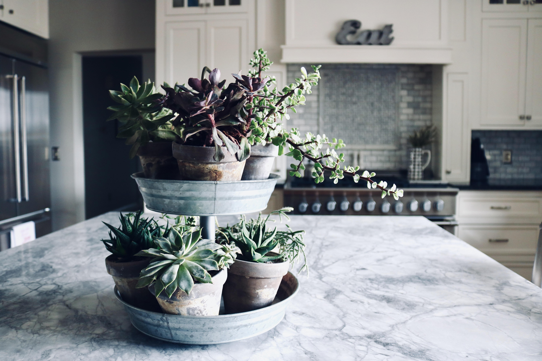 Succulents Cover