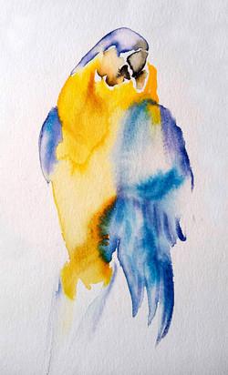 perroquet aquarelle helene (1).jpg