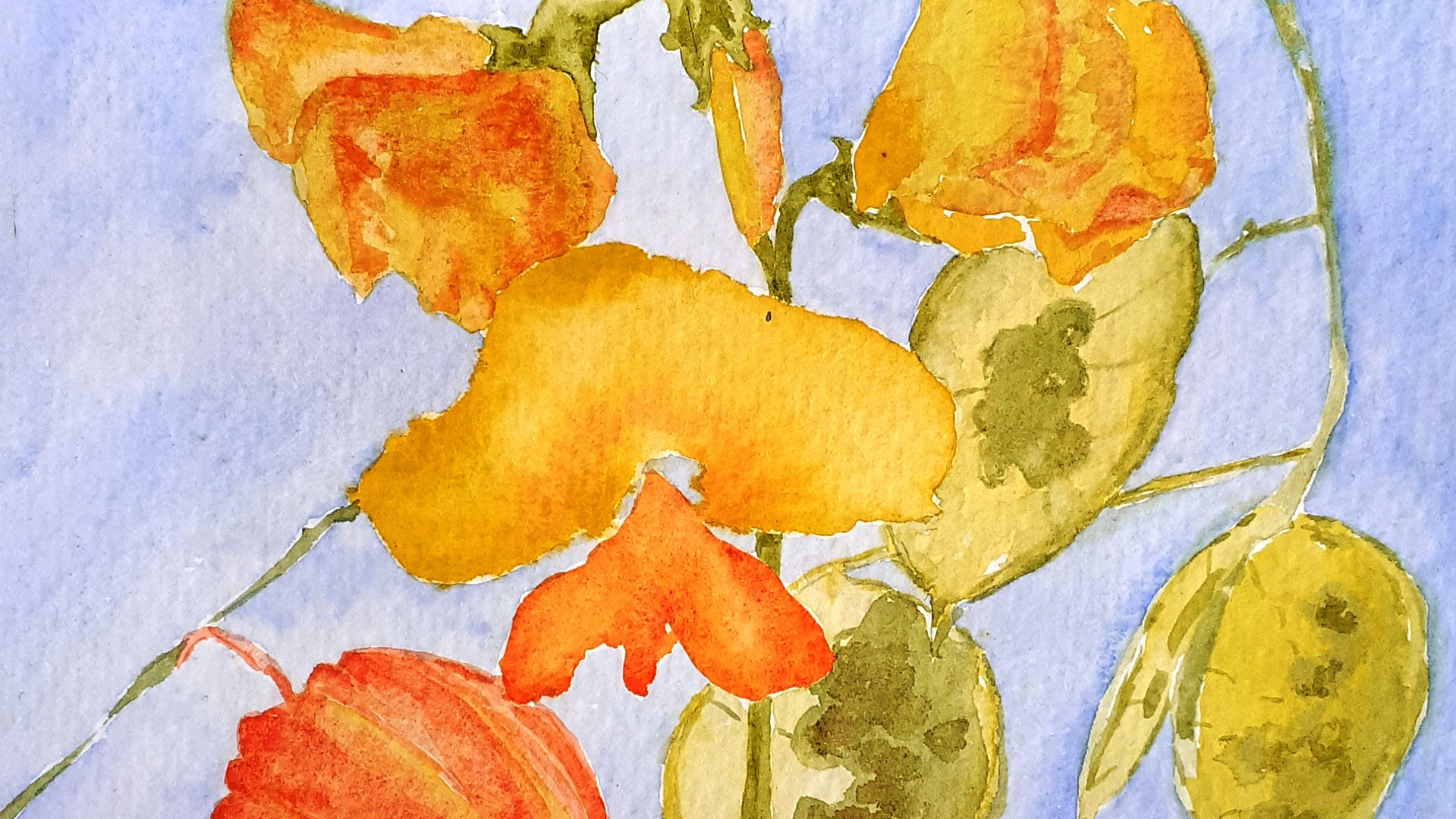 Yellow Sweetpeas Watercolour