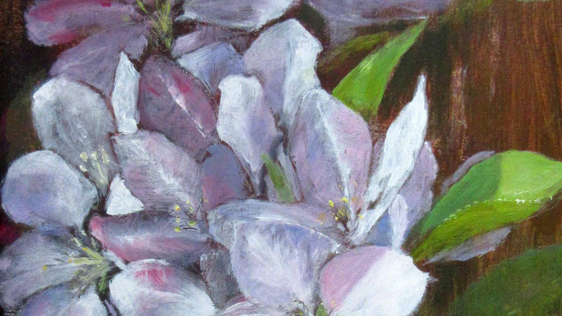 Apple Blossom Oils. 26x17.5cms
