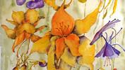 Aquilegias Watercolour