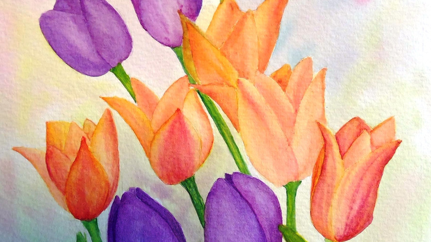 Tulips, Harlow Carr Watercolour. 40x30cms