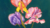 Mixed Sweetpeas Watercolour