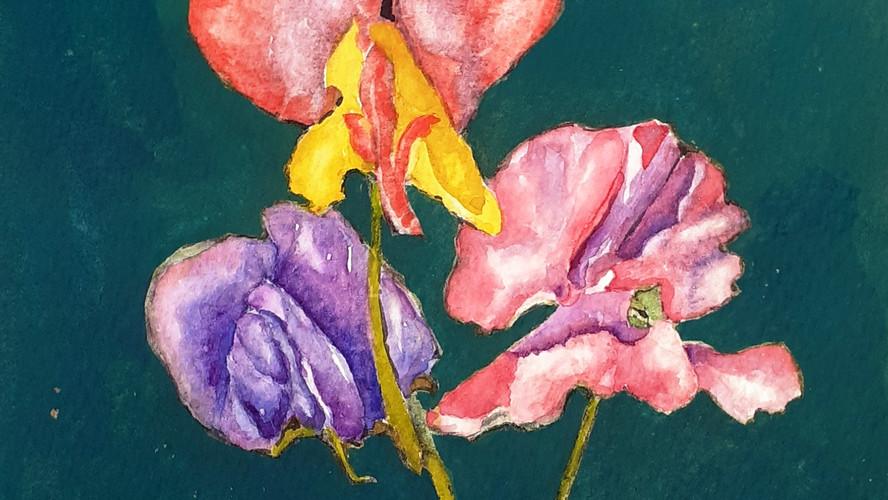 Mixed Sweetpeas Watercolour