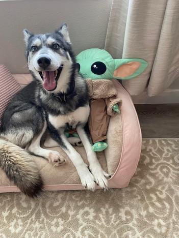 Sylvia's dog Nola