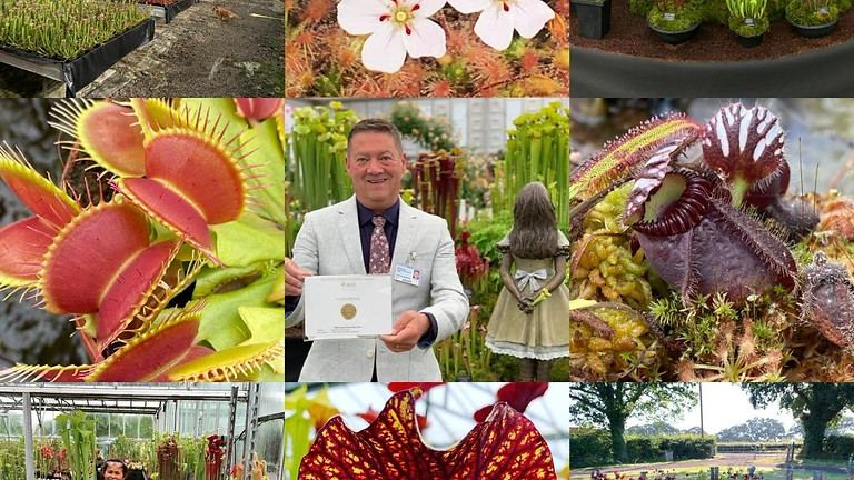 visit  Hampshire Carnivorous Plants Nursery