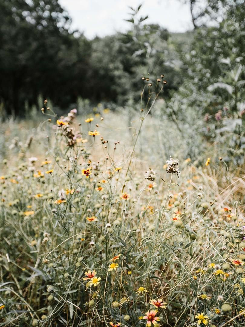 Detail Wildflower 1.jpg