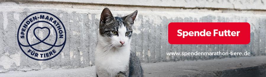 Spenden-Marathon-Banner-Katze-Spenden-75