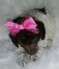 cassie puppy 111