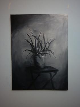 A Aloe Vera on A Chair