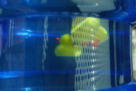 3 Rubber Ducks in Water Dispenser