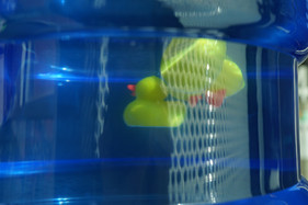 3 Rubber Ducks in Water Dispenser