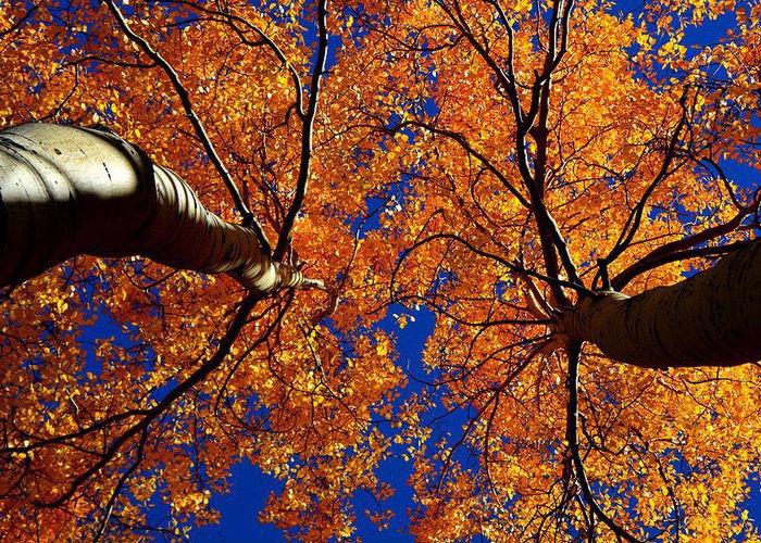 Fall Equinox Integration: Gong Bath