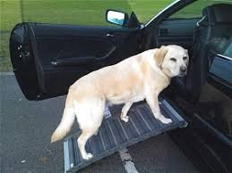Older dogs and cars