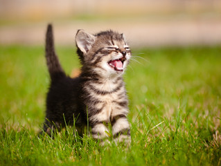 Kitten Season: What to do if you find stray kittens