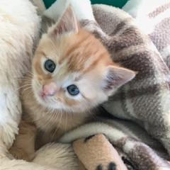 Kittens Again