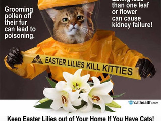 Watch out at Easter
