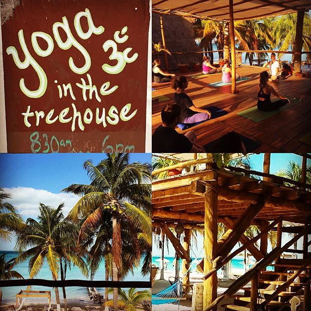 Morning yoga in the tree house by the sea with #gregyogathetreehouse  Greg is an amazing teacher and