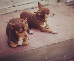 My neighbors - I want to take them home with me  #Mexico #perros #twins