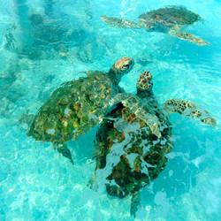 Turtle Sanctuary Isla  Mujeres