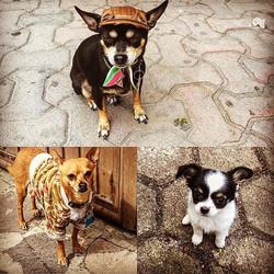 Mas perros de Mexico
