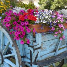 Wagon full of flowers