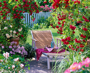 roses in landscape 2.jpg
