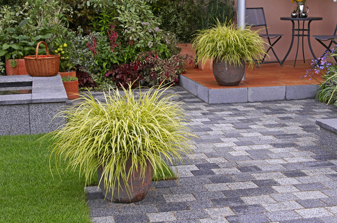 Carex Grasss makes a wonderful companion to winter pots and flower beds.