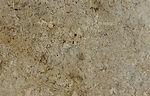 golden beach-crop-u20219.jpg