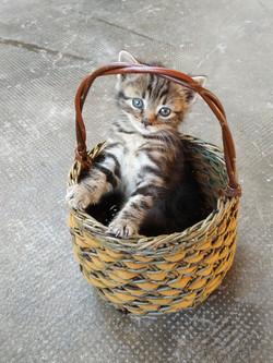 Panier chaton Lydie Maitre
