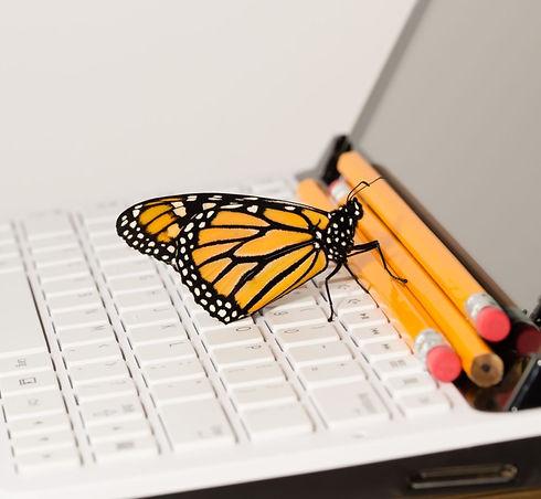 BSB Monarch On Computer_edited_edited.jpg