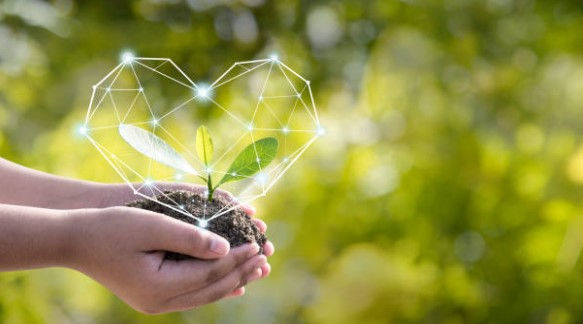 Conseil en naturopathie à distance