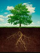 Les principes de base de la naturopathie : le causalisme