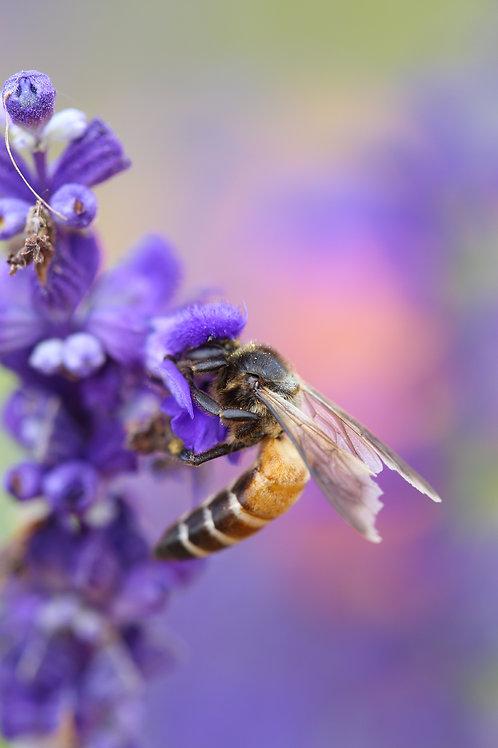 Pollinator Bee Garden - Conservation Garden - pk 3