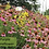 Thumbnail: GSP Wildflowers Perennials - 1/4 lb bag