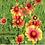Thumbnail: GSP Wildflowers Perennials - 1/4 lb bag