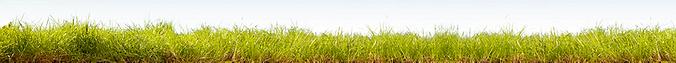 pasto-crop-u18911.png