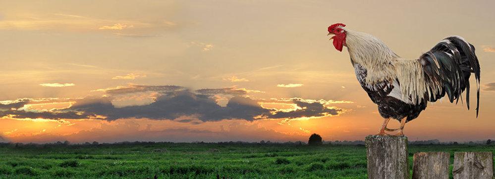 aves-crop-u3713.jpg